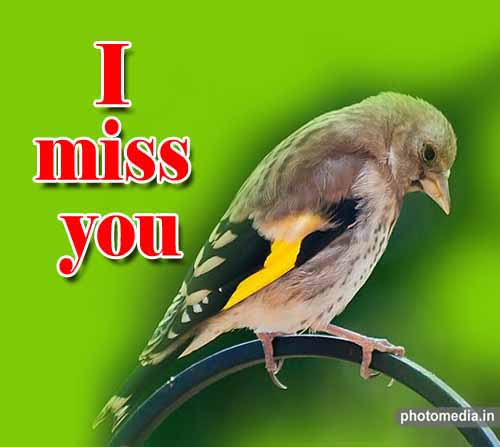 i miss you sad image hd