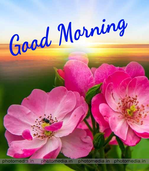 have a nice day good morning flowers