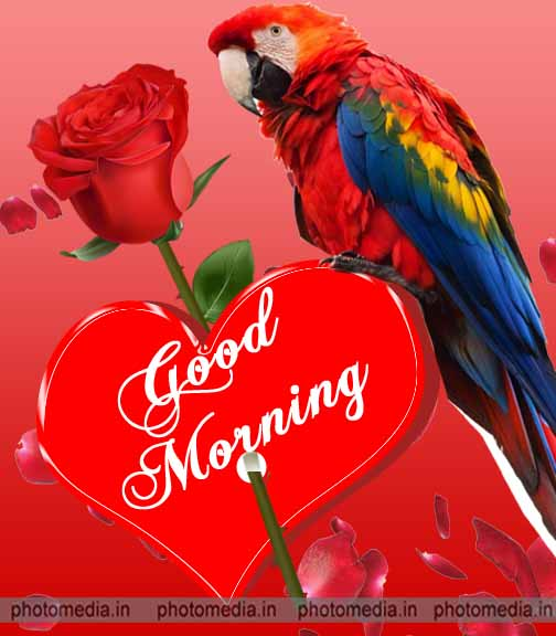 good morning parrot image