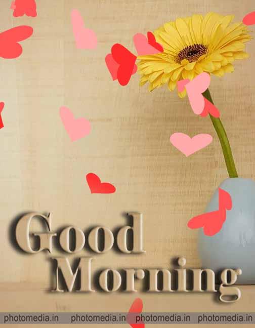 good morning sunflower pic