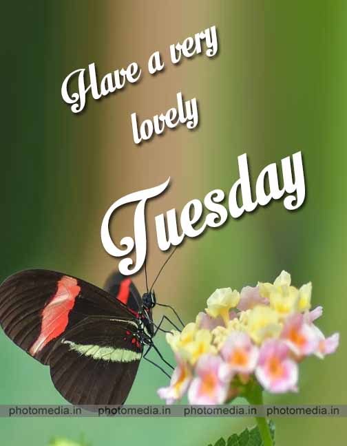 tuesday blessings image